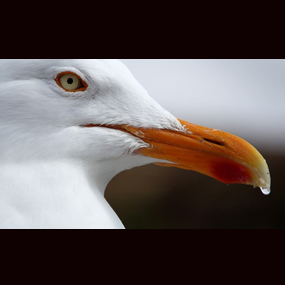 gull-with-water-285